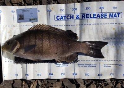 BlackFish 1st- Brendon Palmer