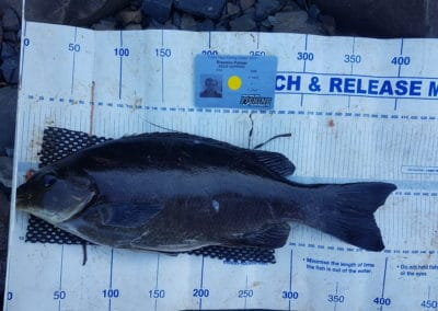 Blackfish 1st - Brendon Palmer
