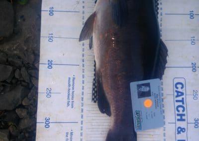 Blackfish 1st- Ray Palmer