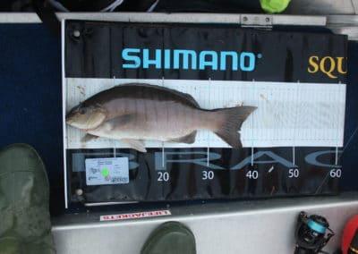 Blackfish 2nd - Shane Casson