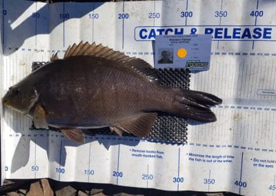 Blackfish 3rd - Brendon Palmer