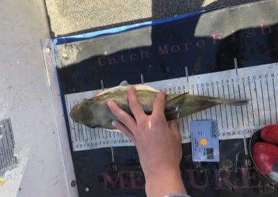 Merit 1st- Puffer Fish - Oliver Kaluzyn