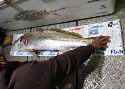 mulloway 2nd- arrow oldfield
